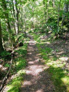 Mossy green hillside trail
