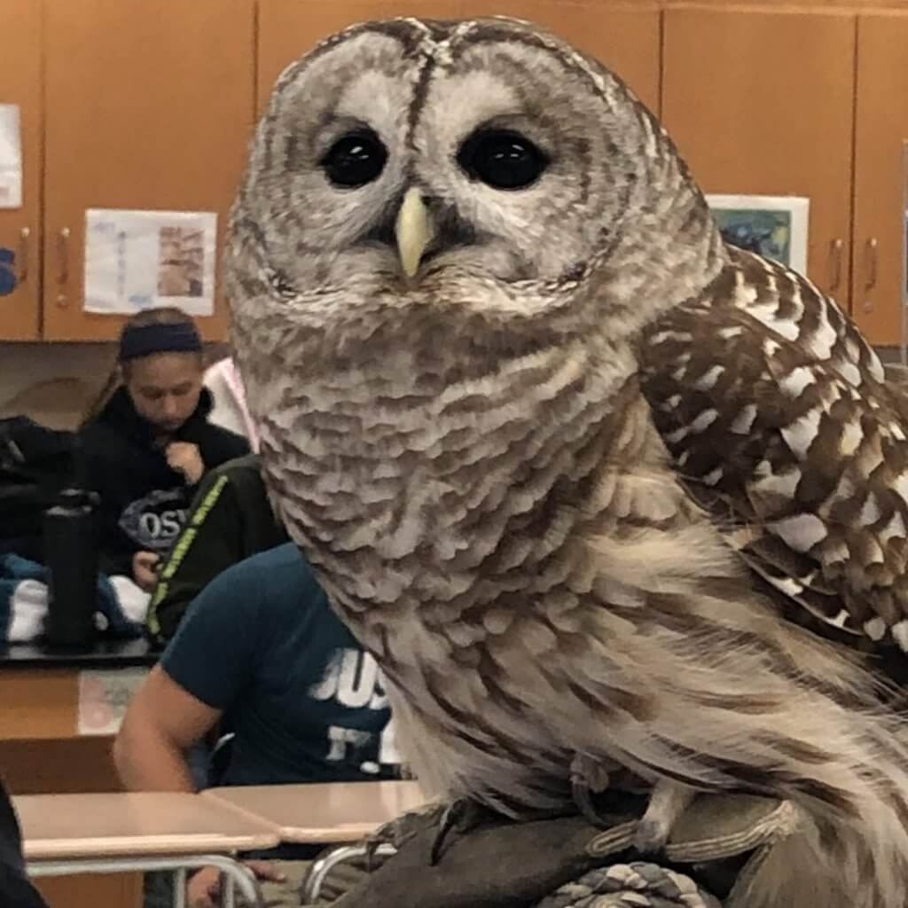 owl in classroom