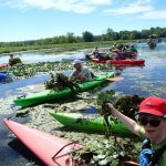 kayakers removing invasive plants