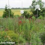 Meigs Point Pollinator Garden
