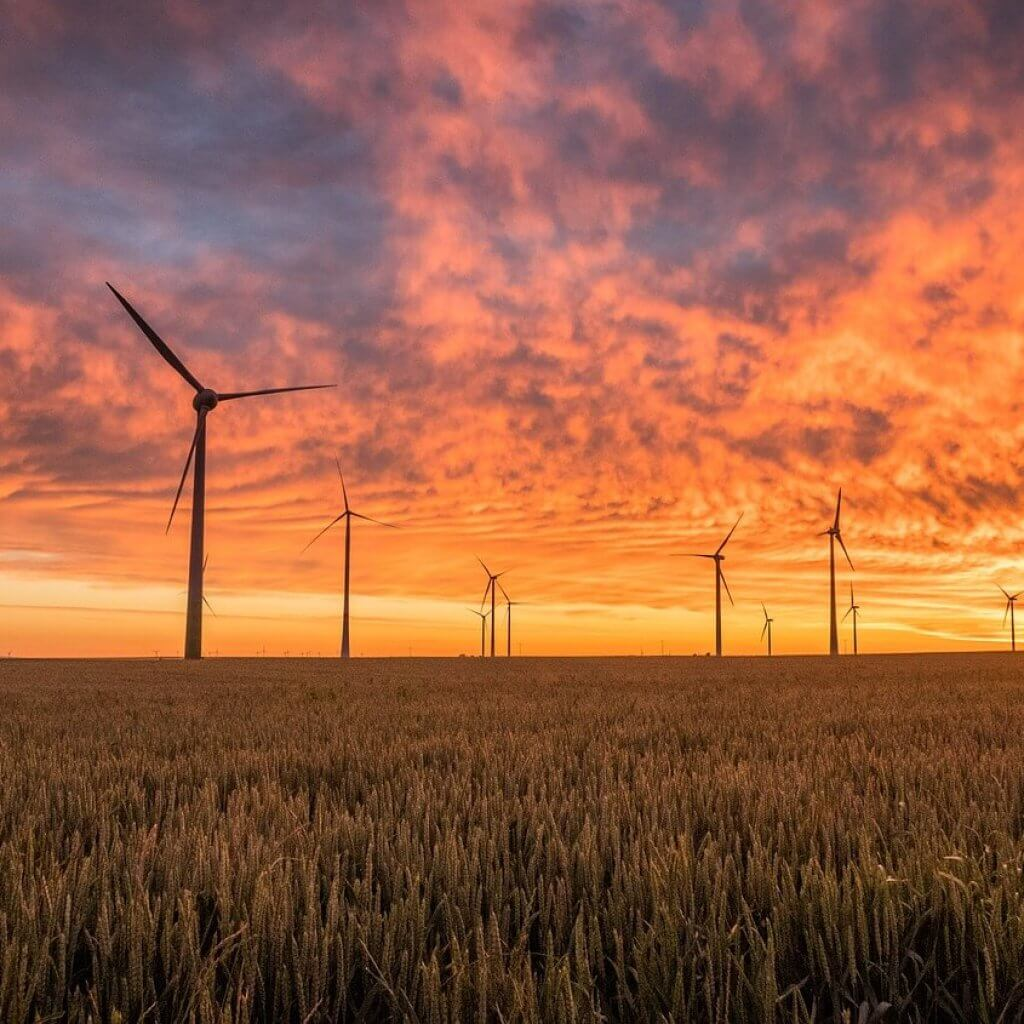 Sun setting over field with wind turbines