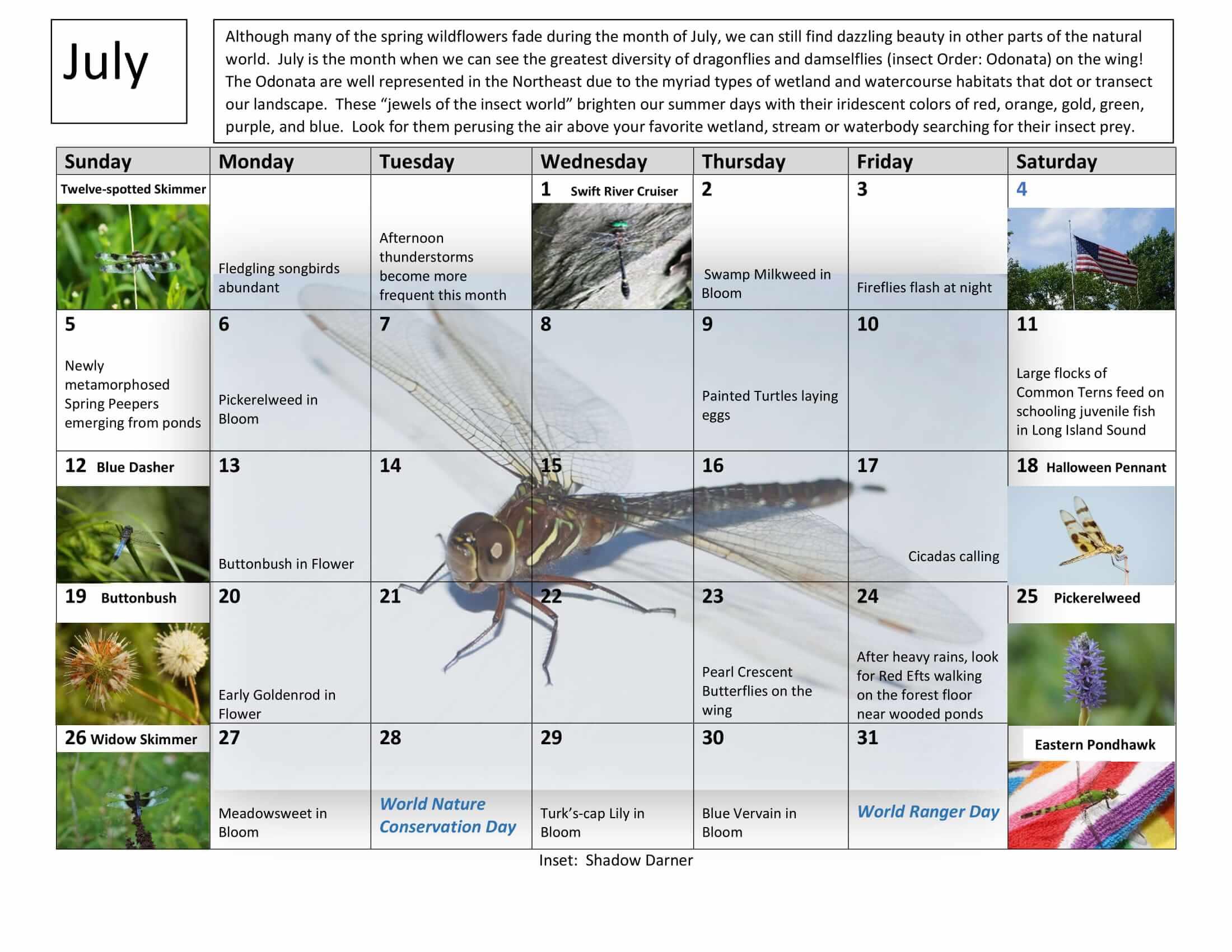July Nature Calendar
