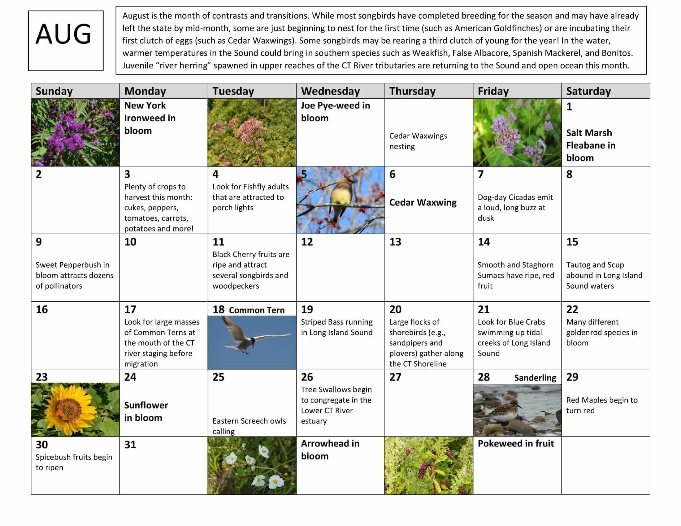 August Nature Calendar